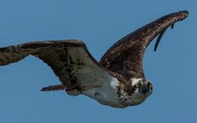 Картинка полет, птица, крылья, клюв