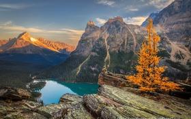 Обои лес, горы, скалы