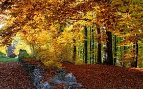 Картинка осень, лес, листья, деревья, стена, забор, Швейцария