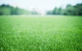 Обои зелень, трава, зеленая