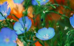 Обои клумба, сад, лепестки, растение, природа