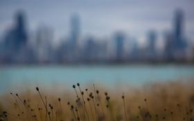 Картинка трава, город, фон