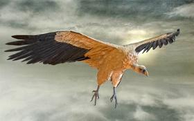 Обои небо, облака, птица, крылья, клюв, когти, холст