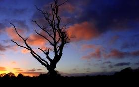Обои небо, ветки, природа, дерево, силуэт