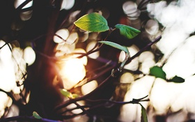 Картинка листья, ветки, дерево