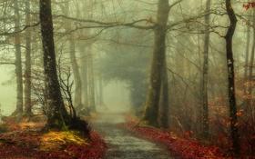 Обои осень, лес, листья, деревья, туман, путь
