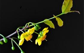 Обои растение, фон, ветка, природа, цветы