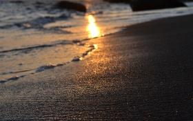 Обои море, пляж, свет, природа, тепло, солнца, боке
