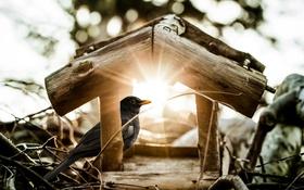 Обои солнце, лучи, домик, птичка