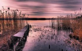 Обои небо, облака, озеро, растение, вечер