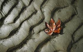Обои земля, лист, мокрая