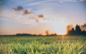 Обои небо, трава, облака, закат, зеленая