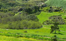 Обои парк, природа, деревья, панорама, тропинки, Glen Canyon Park, San Francisco