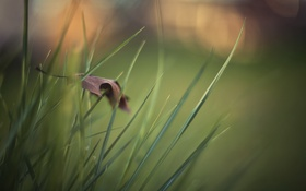 Обои трава, лист, макро