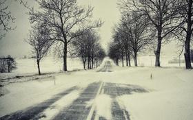 Картинка зима, дорога, снег, деревья, ветки