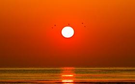 Обои море, солнце, закат, птицы