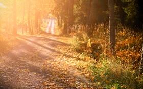 Обои осень, свет, утро