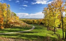 Картинка дорога, осень, лес, трава, листья, деревья, природа