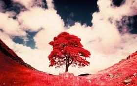 Обои дерево, краски, фильтр, небо, трава, облака
