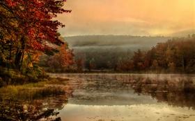 Обои деревья, туман, отражение, зеркало, озеро, утро