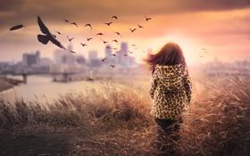 Картинка поле, птицы, девочка
