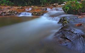 Картинка лес, деревья, река, поток, пороги