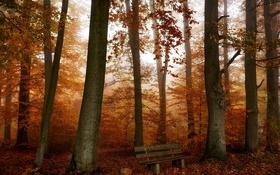 Картинка скамья, осень, лес