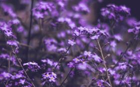Обои summer, flowers, цветы