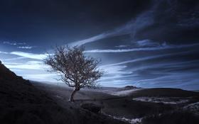 Обои небо, дерево, цвет, гора