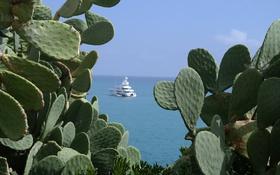 Картинка море, Франция, яхта, кактус, Антиб