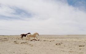 Обои sky, desert, clouds, horses, running