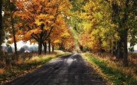 Обои дорога, осень, листья, деревья, листва, дома, сельская местность