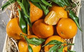 Обои мандарины, цитрусы, корзинка, листики