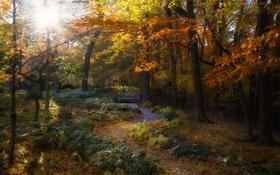 Обои осень, лес, листья, солнце, деревья, ветки, путь