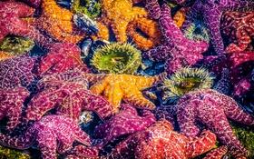 Обои California, Laguna Beach, Sea Stars, Mosaic