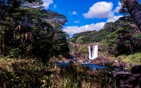 Обои лес, деревья, скала, камни, водопад, Гавайи, речка
