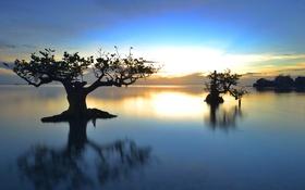 Картинка озеро, вечер, небо, зарево, деревья, облака