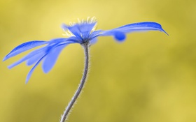 Картинка цветок, природа, лепестки, стебель