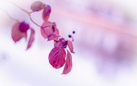 Обои природа, осень, ягоды