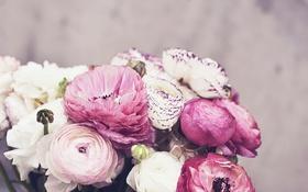 Картинка цветы, лепестки, розовые, белые