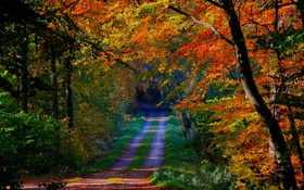 Обои дорога, деревья, осень, лес, листья