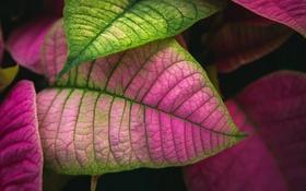 Картинка листья, природа, цвет