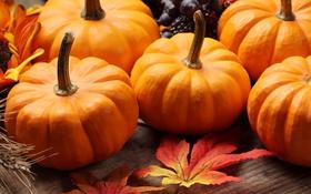 Обои осень, листья, цветы, подсолнух, колосья пшеницы