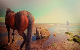 Картинка природа, конь, горизонт, мужчина, Man and horse