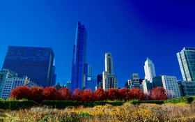 Обои осень, небо, деревья, дома, Чикаго, США
