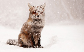 Обои Fox, Winter, Snow
