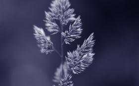 Обои трава, природа, фон, растение