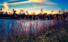 Картинка небо, трава, облака, озеро, стебли, кусты
