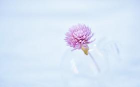 Обои цветок, природа, фон
