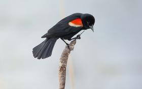 Картинка макро, природа, птица
